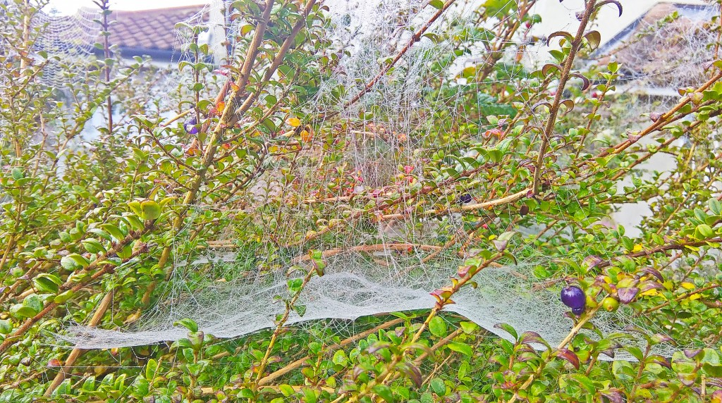 My Sunday Photo: The Sparkling Spider Webs