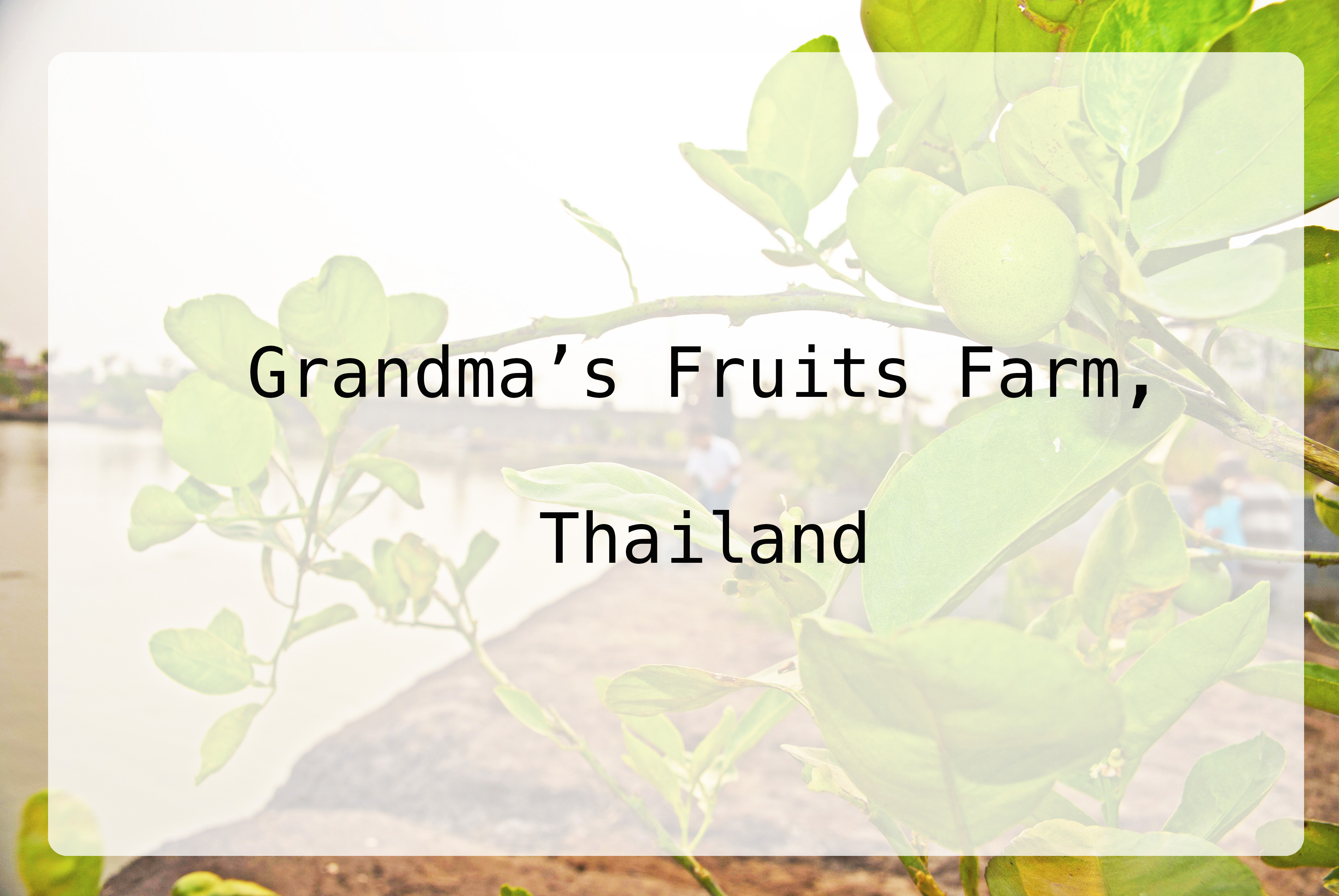 Grandma's Fruits Farm   Thailand