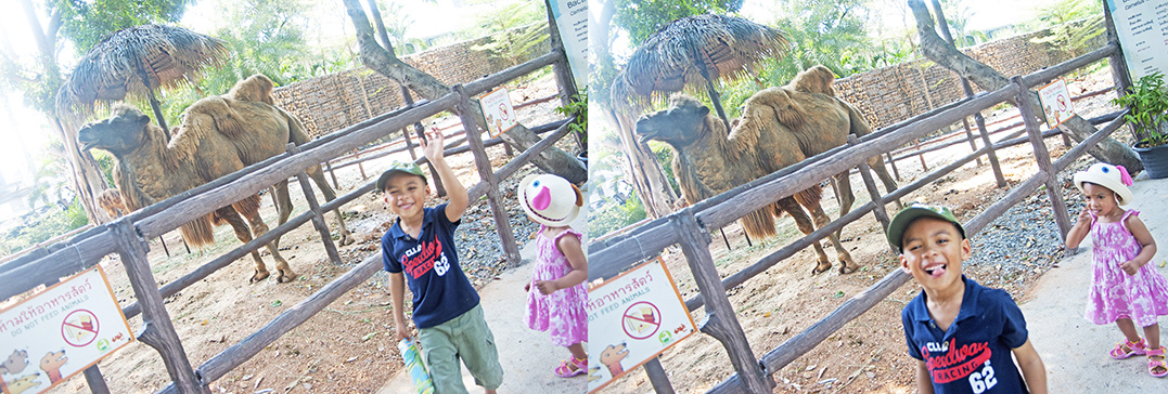 A Visit to Dusit Zoo / Khao Din   Thailand