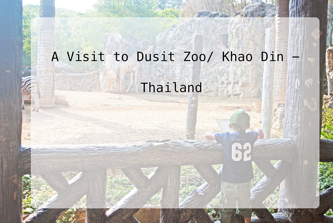 A Visit to Dusit Zoo / Khao Din | Thailand