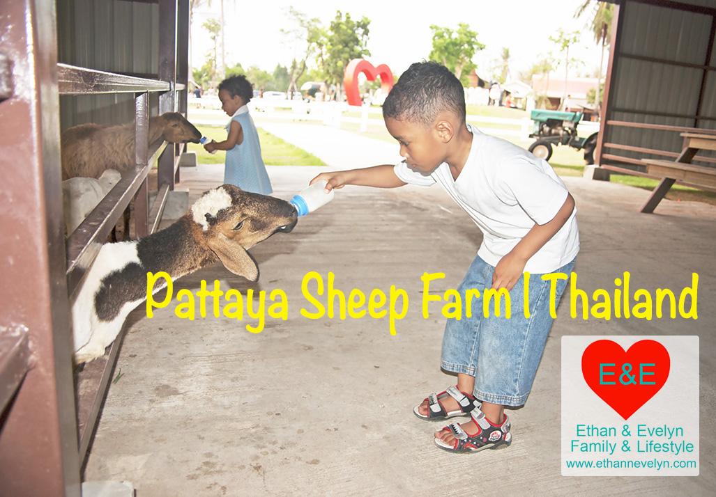 Pattaya Sheep Farm | Thailand