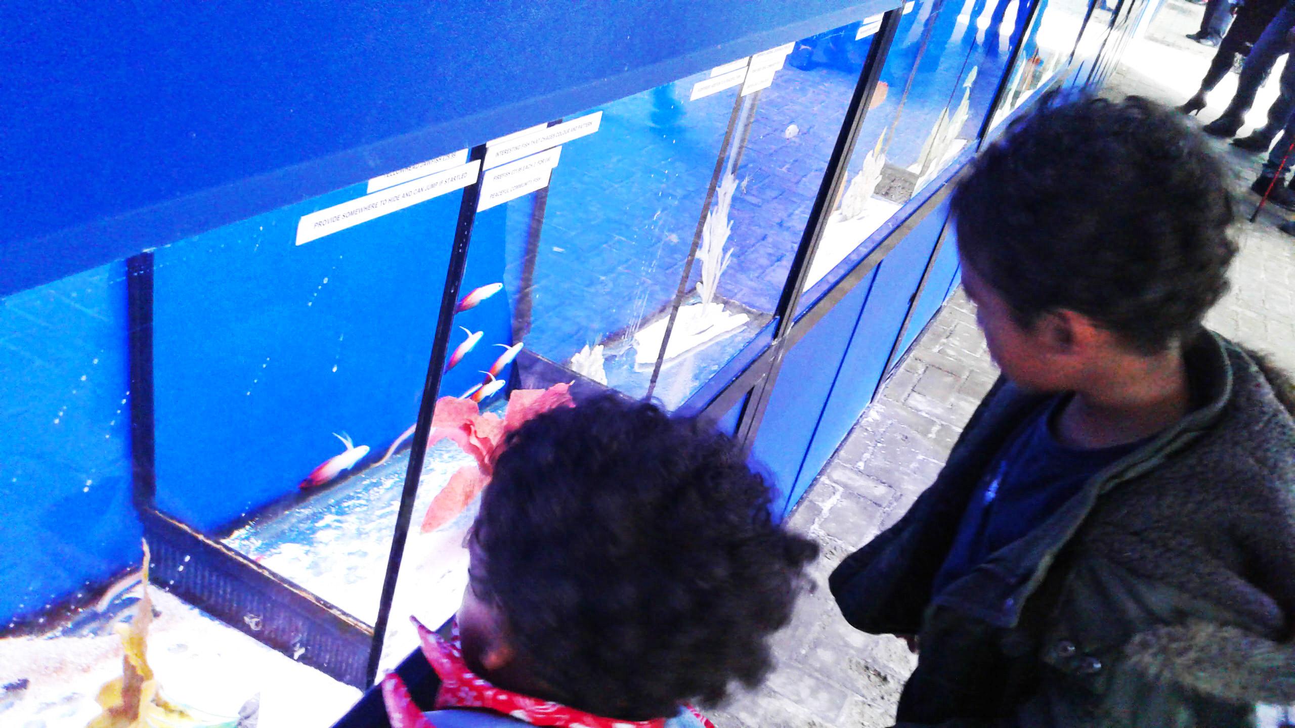 Tetra Starter Line 54 Litre Fish Tank Review
